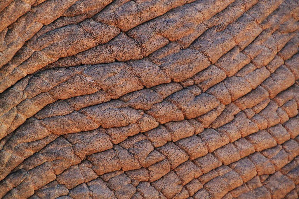elephant-skin-245071_1920